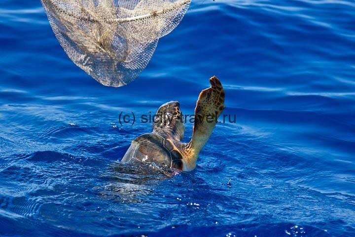 Черепахи на Лампедузе